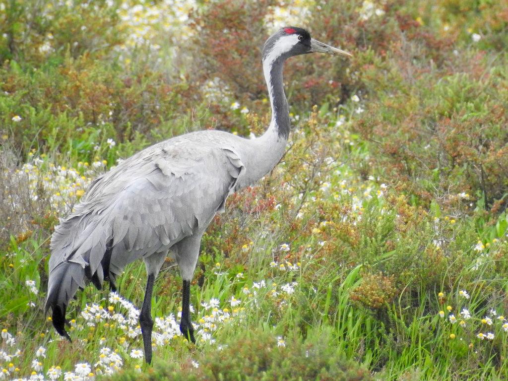 Parque nacional Doñana fauna